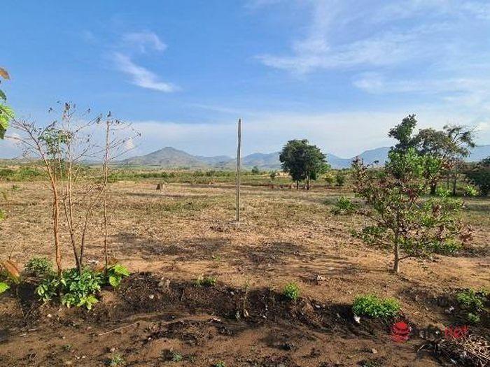 """Giao 438 ha rừng làm kinh tế, doanh nghiệp """"bỏ chạy"""", cả đất lẫn rừng """"biến mất"""""""