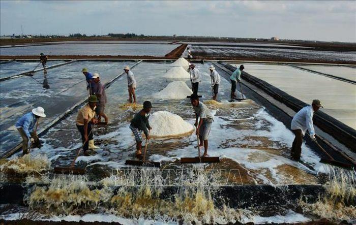 Nghề muối Bạc Liêu hướng đến nâng cao giá trị sản xuất