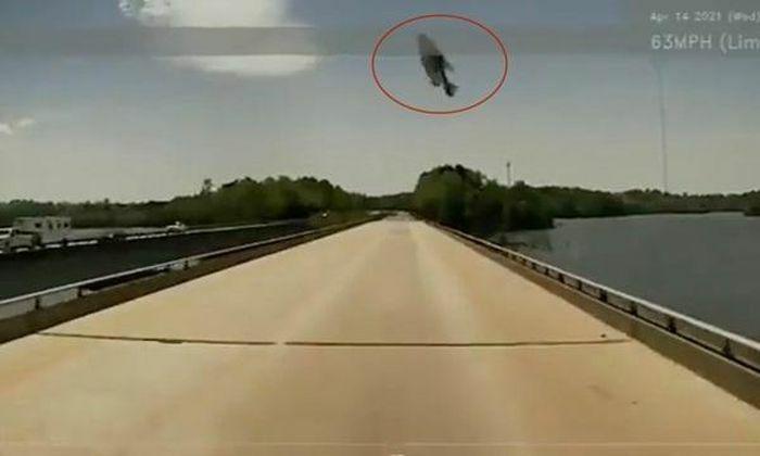 """Đang lái xe, tài xế giật thót khi thấy """"cá bay"""" cực dị trên không trung"""