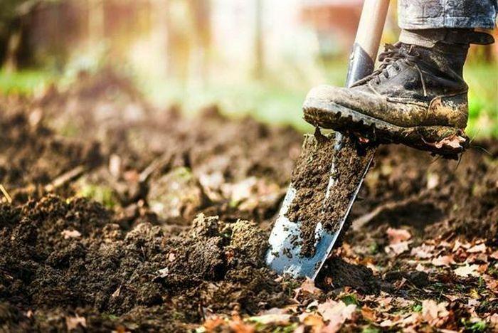 Đào được chiếc rương bí ẩn ở sân vườn, tưởng kho báu ai ngờ đụng trúng…