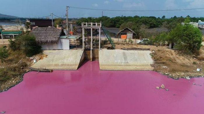 Nước thải xả ra đầm nước đổi màu hồng tại Bà Rịa – Vũng Tàu vượt quy chuẩn hiện hành