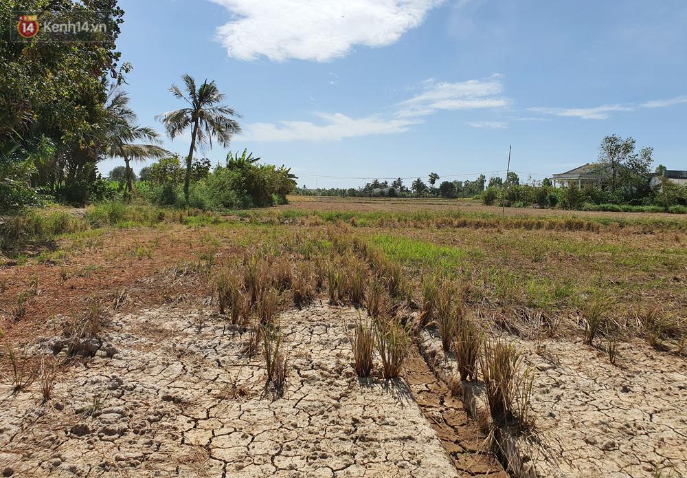 """Người miền Tây bên những cánh đồng nứt toác vì hạn mặn: """"Lúa trồng xuống là chết, nước sông mặn đắng cả rồi!"""""""
