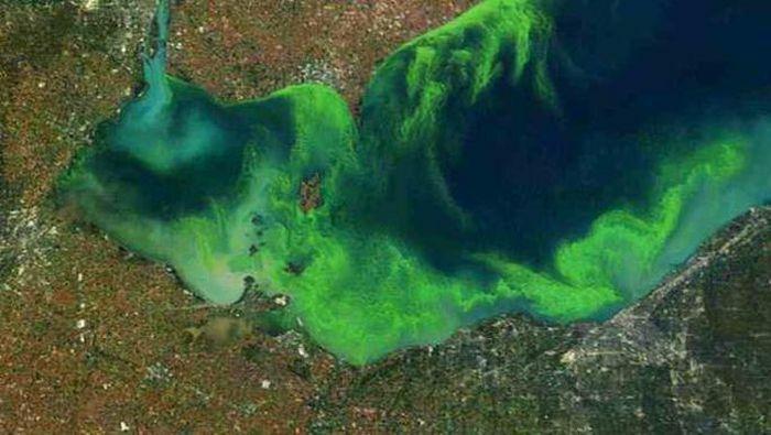 """Sinh vật hàng tỉ tuổi phóng """"yếu tố chết nhanh"""" vào không khí nhiều nơi trên thế giới"""