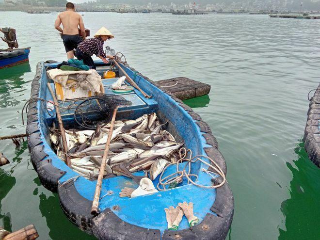 Nóng trên mạng xã hội: Hết cá sông đến cá biển chết bất thường hàng loạt