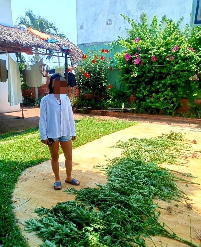 Người phụ nữ trồng hàng chục cây cần sa để… chữa mất ngủ?