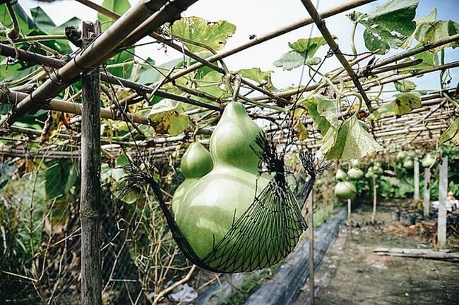 Báu vật siêu khổng lồ, nặng vài chục kg của nông dân Việt Nam