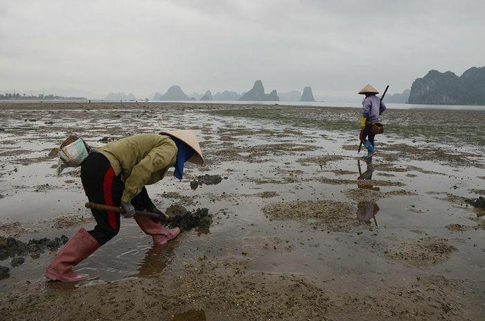 Mưu sinh nơi cửa biển Vân Đồn