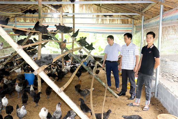 """Hà Giang: """"Rót vốn"""" nuôi gà đen đặc sản, nông dân nghèo có thu nhập khấm khá"""