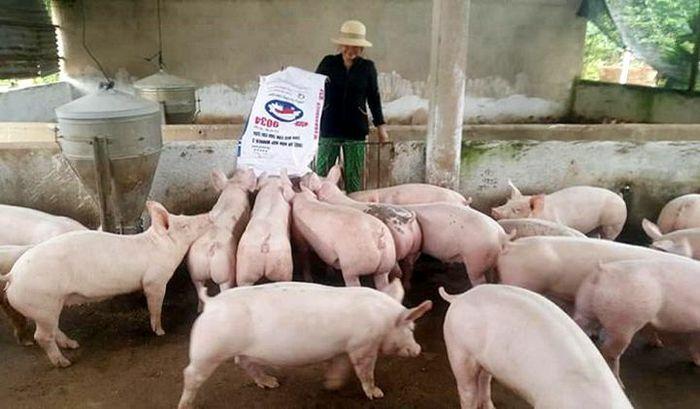 Giá lợn hơi hôm nay 6/4/2021: Biến động nhẹ, cao nhất đạt 77.000 đồng/kg