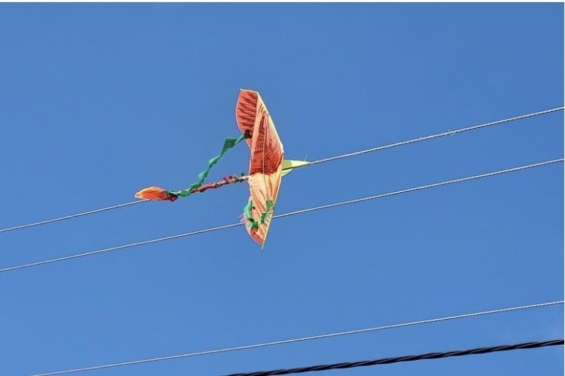 Bình Định: Tình trạng thả diều gây mất an toàn lưới điện