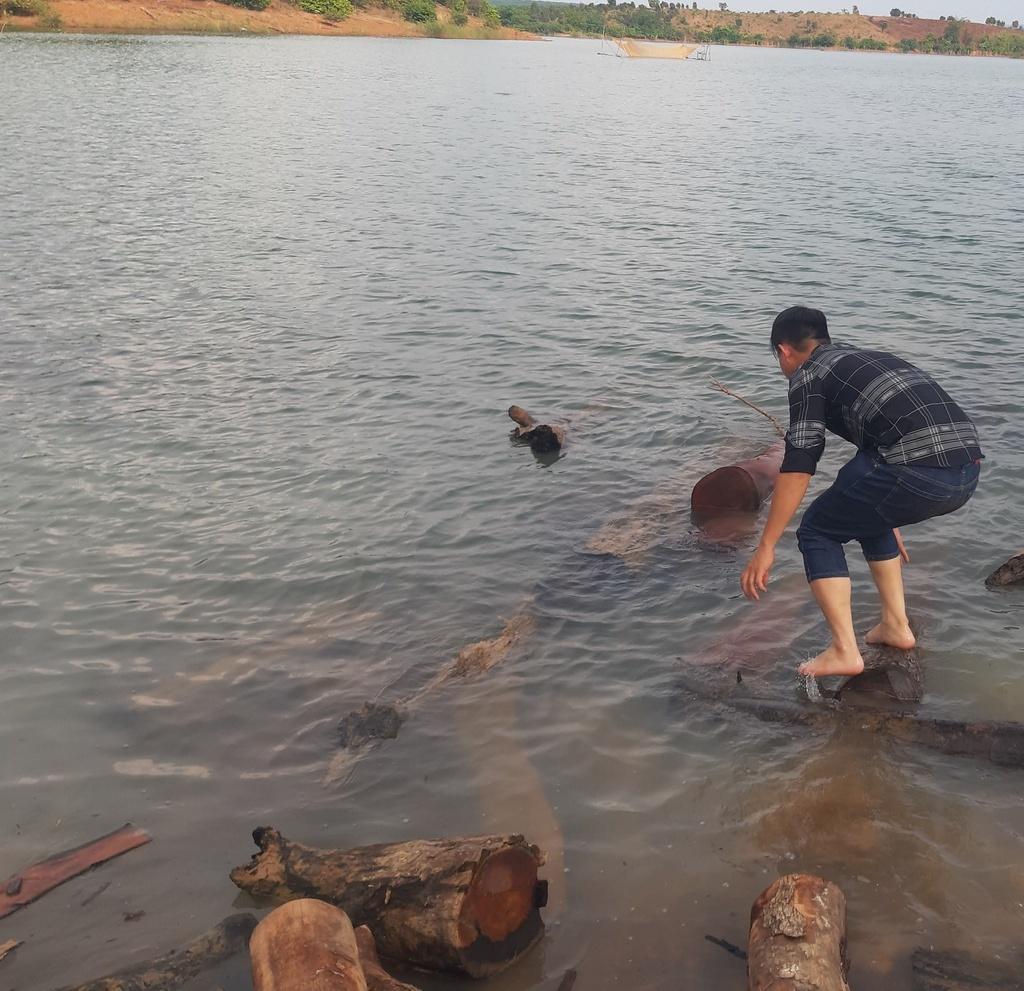 Gia Lai: Gỗ lậu tràn trên bến, dưới sông