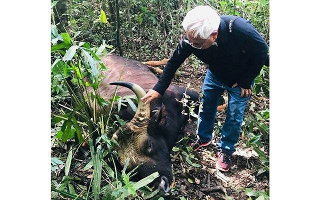 Bò tót nặng 700 kg chết trong khu bảo tồn