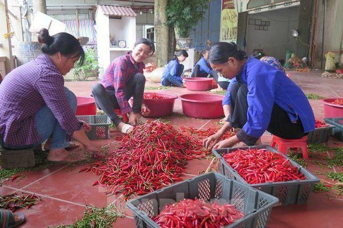 Bác thông tin Trung Quốc cấm nhập khẩu ớt từ Việt Nam