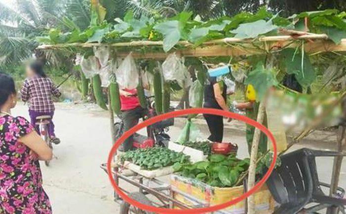 Sạp rau đặc biệt gây sốt mạng vì có cách bán hàng quá cao tay, ai thấy cũng phải vào mua