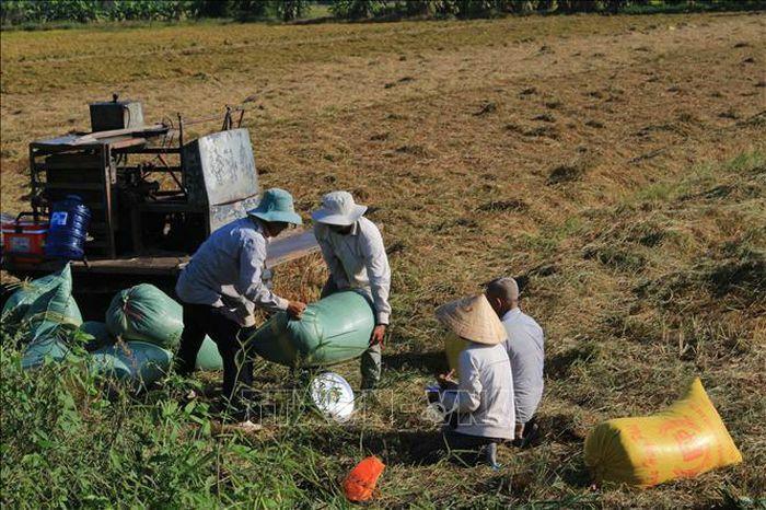 Thị trường nông sản tuần qua: Nhiều nông sản giảm giá