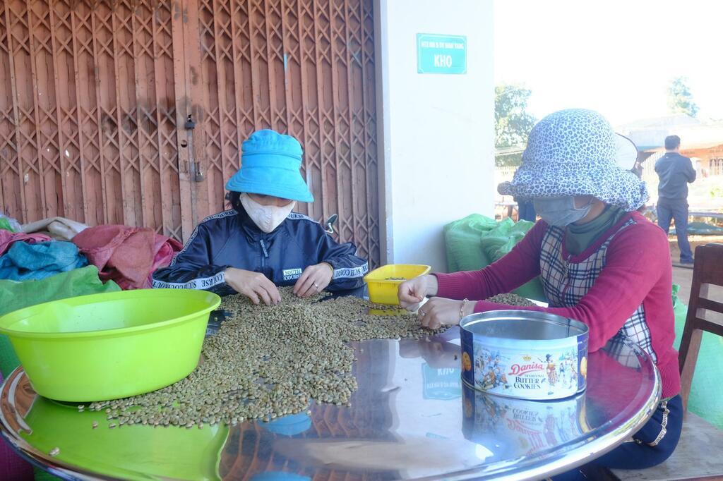 """Tại sao xuất khẩu cà phê sang Trung Quốc đột nhiên bật tăng 83,3%, giá cà phê sẽ """"ấm"""" hơn?"""