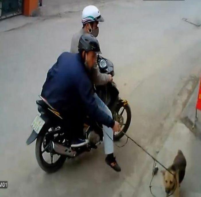 Cấm ăn thịt chó có ngăn được trộm chó?