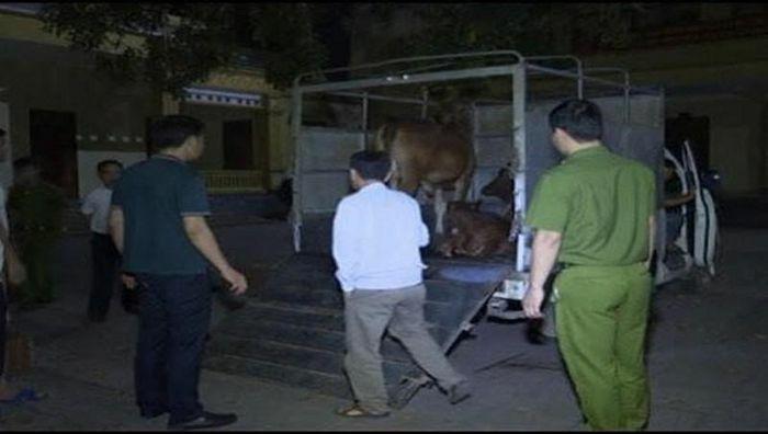 Phát hiện xe tải chở bò mắc bệnh viêm da nổi cục đi tiêu thụ