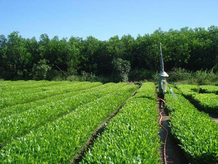 Chủ động chuẩn bị giống cho trồng rừng vụ Xuân Hè