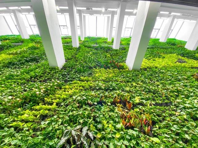 Khu vườn thẳng đứng trong nhà: Rộng hàng trăm m2, trồng gần 23.000 cây xanh