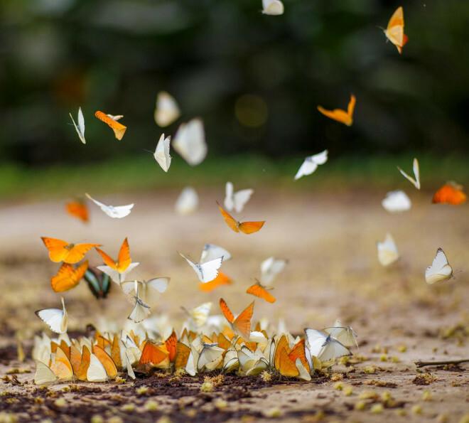 Điểm du lịch dịp nghỉ lễ gần Hà Nội: Săn bướm ở Cúc Phương, ngắm trọn đất trời ở Hang Múa