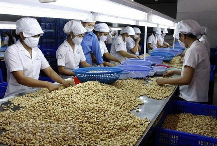 Nông sản xuất khẩu có thể chịu ảnh hưởng từ quy định SPS của các nước thành viên WTO