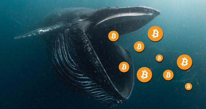 "Cá voi Bitcoin đang dần ""tuyệt chủng""?"