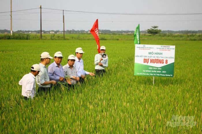 """Nông dân """"miền đất lửa"""" mê tít các giống lúa của Vinaseed Group"""