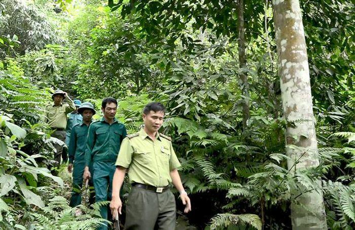 Chủ động phòng cháy, chữa cháy rừng