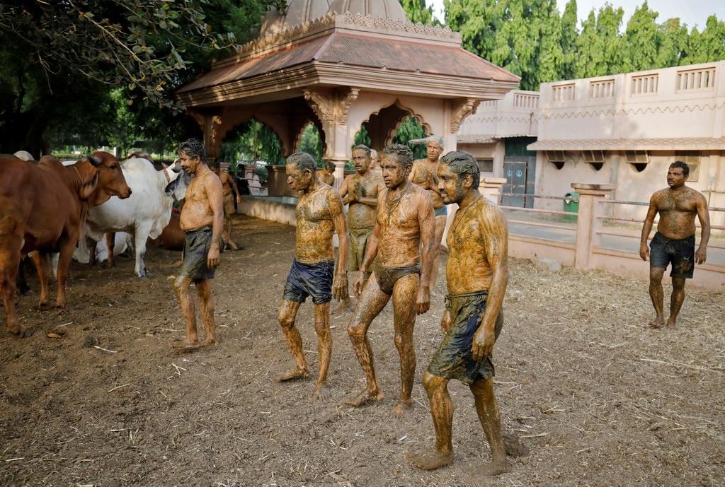 Dân Ấn Độ bôi phân bò lên người chữa Covid-19