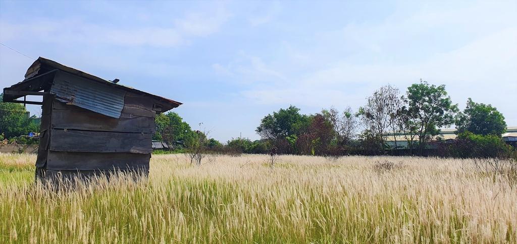 """""""Chết mê"""" với cánh đồng cỏ lau ở TP.HCM"""
