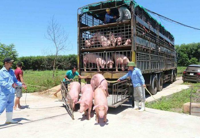 Giá lợn hơi hôm nay 30/5/2021: Biến động từ 1.000 – 4.000 đồng/kg