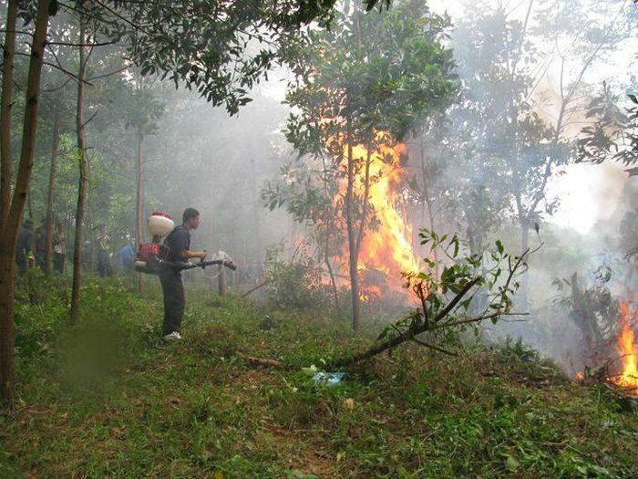 Phòng chống cháy rừng: Những việc cấp bách cần làm ngay