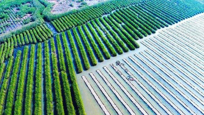 Nhiều hộ dân tự ý lấn chiếm rừng phòng hộ để nuôi thủy sản