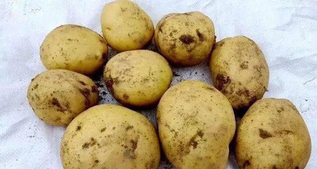 3 loại khoai tây chớ nên mua và 3 lưu ý khi ăn nó, đừng dại mà mắc phải kẻo mang bệnh vào người