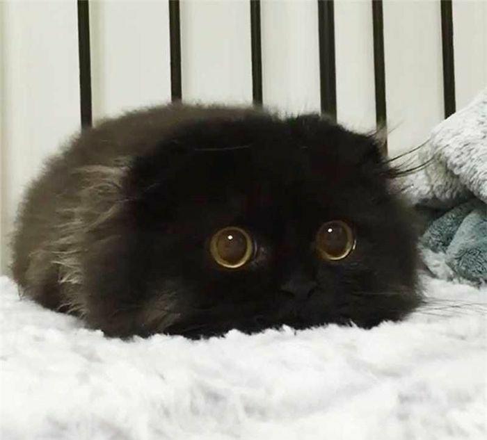 Chiêm ngưỡng những khoảnh khắc cực kỳ đáng yêu của mèo con