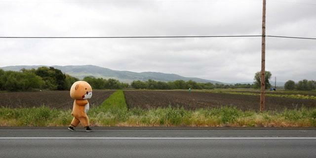 """""""Gấu bông"""" đi bộ 644 km thu hút nhiều người xin chụp ảnh cùng"""