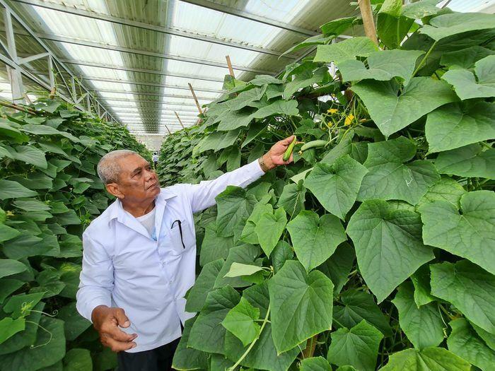 Triển vọng kết hợp sản xuất nông nghiệp và điện mặt trời