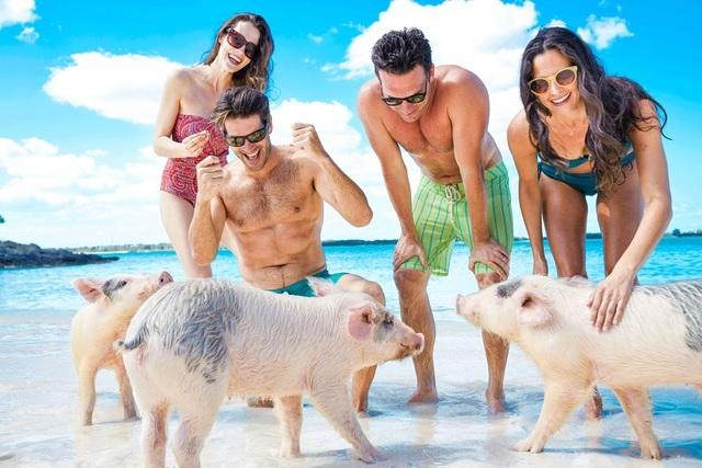 Hài hước cảnh lợn đuổi theo cắn du khách