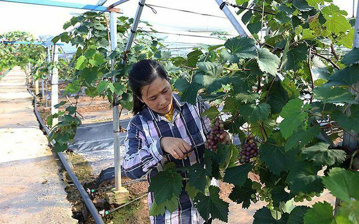 Sản xuất nông nghiệp hữu cơ ở nhiều địa phương