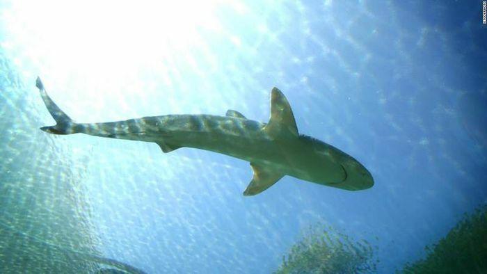 Úc: Bị cá mập tấn công, một vận động viên lướt sóng thiệt mạng