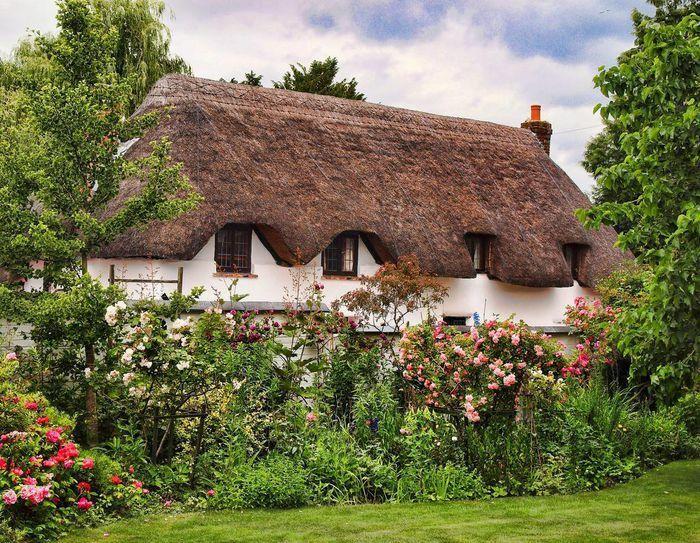 Những ngôi nhà phủ đầy hoa hồng khiến ai nhìn cũng mê