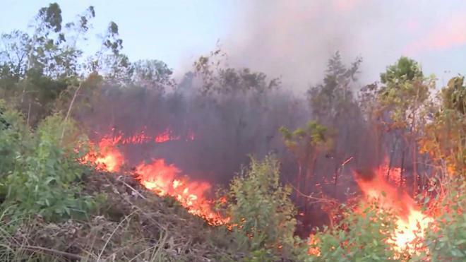 Bị truy tố vì gây cháy hơn 47 ha bạch đàn khi đốt dọn rừng