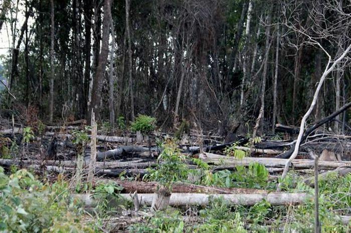 Tan hoang rừng tự nhiên của dự án nông-lâm kết hợp ở Đắk Nông - ảnh 1