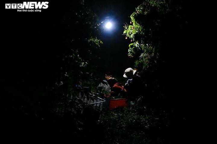 Ảnh: Người dân Bắc Giang soi đèn, xuyên đêm thu hoạch vải thiều - ảnh 1