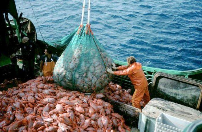 Biển Đen đối mặt với thảm họa sinh thái do đánh bắt quá mức - ảnh 1