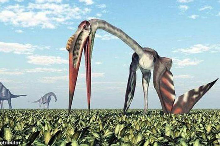 Giải mã loài ''quái vật bay khổng lồ'' thời tiền sử - ảnh 1
