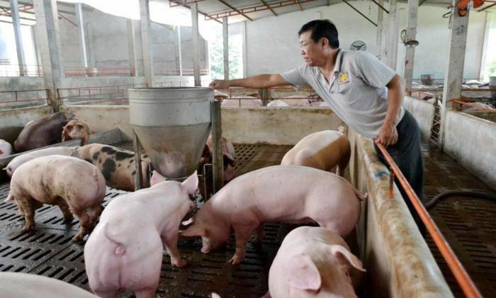 Giá lợn hơi hôm nay 12/6/2021: Cao nhất đạt 75.000 đồng/kg - ảnh 1
