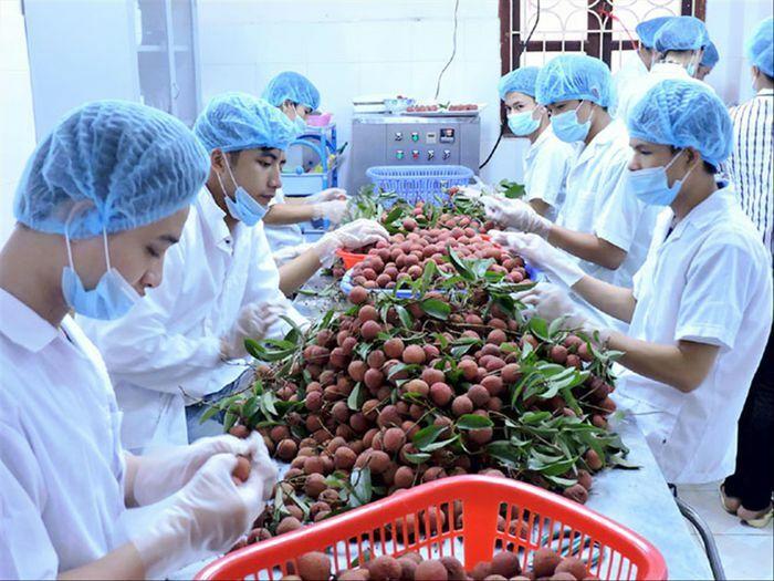 Tiếp cận thị trường ngoại, nông sản lên sàn - ảnh 1