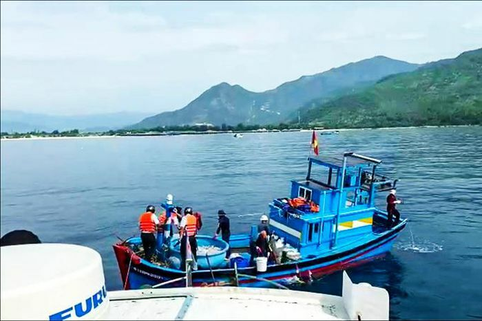 Tăng cường xử lý tàu cá ngoài tỉnh khai thác trái phép - ảnh 1